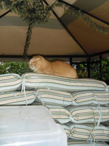 cat under canopy